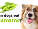 Can-dogs-eat-edamame-678x381