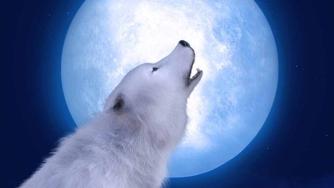 barking at night with the moon