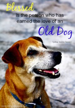 Senior dog quote. Blessed love of an old dog.