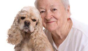 cocker spaniel dog with senior woman