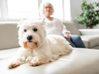 dog sitting on a couch in an apartment with senior woman