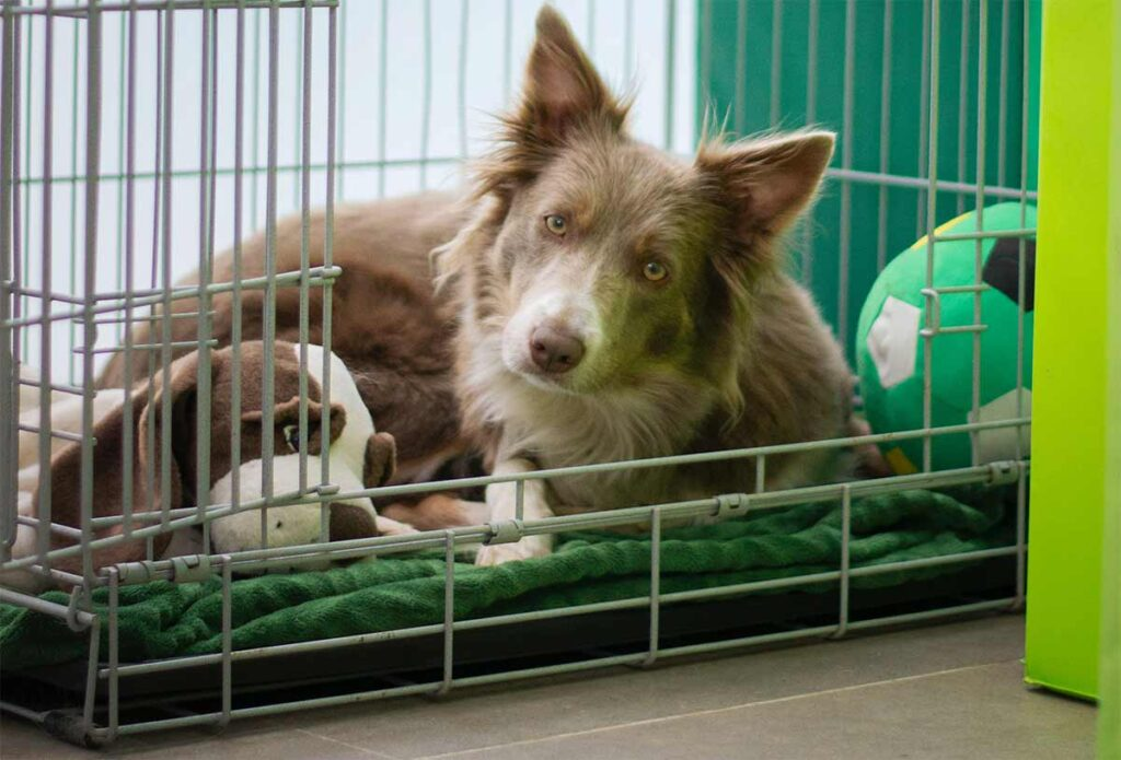 dog in crate with toys