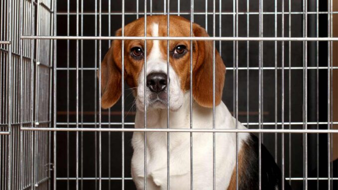 dog whining in a crate