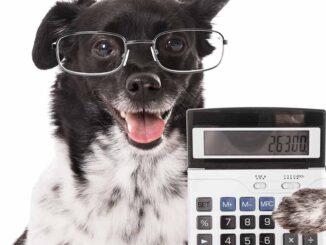 dog holding calculator