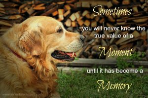 Old dog quote. Moments & Memories
