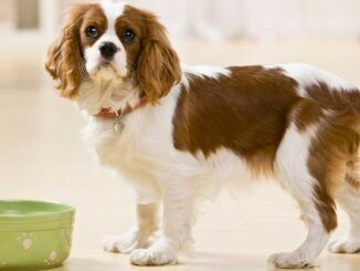 dog standing in front of a bowl of food and not eating