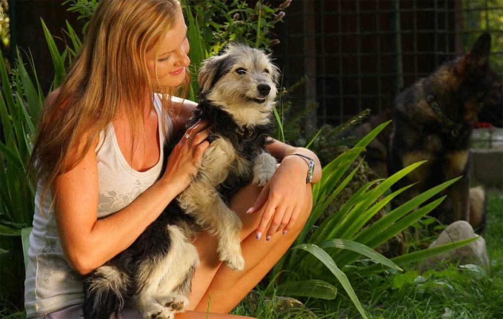 Dog sitting on owner's lap
