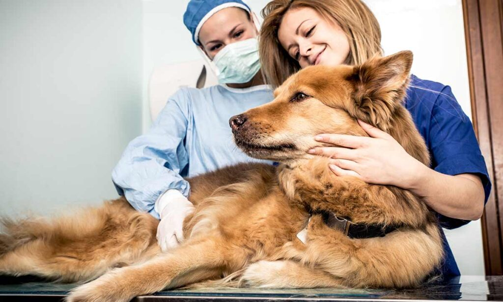 Dog with two veterinarians