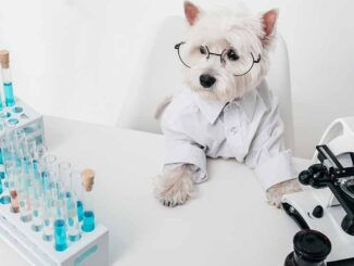 pet dressed up as scientist to prepare supplements